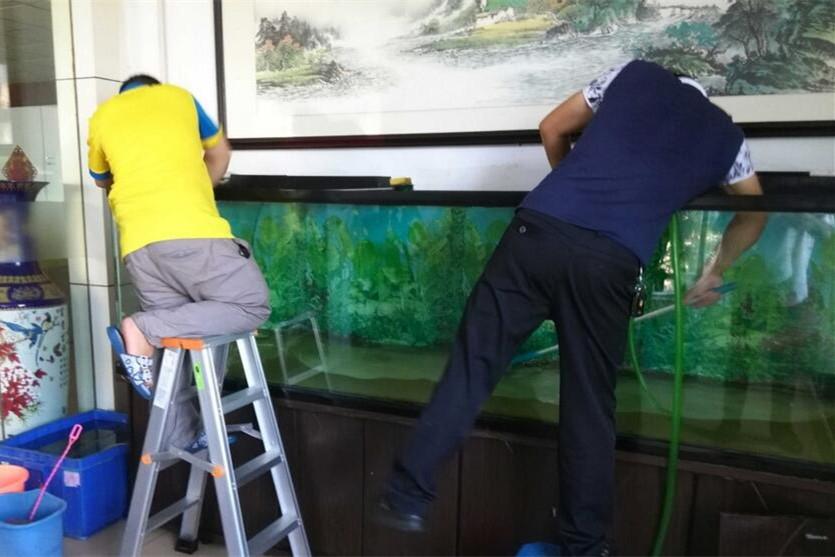 中山上门鱼缸清洗维护服务